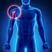 Male bone anatomy shoulder joint Stock Illustration