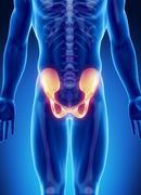Male bone anatomy pelvis Stock Illustration