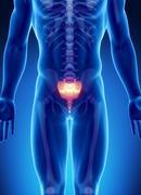 Male bone anatomy sacrum Stock Illustration