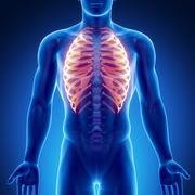 Male bone anatomy ribs Stock Illustration
