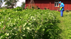 Farmer spray pesticide on bean plants near rural house Stock Footage