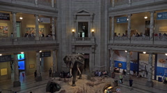 Smithsonian Natural History Museum entrance elephant 4K 080 Stock Footage