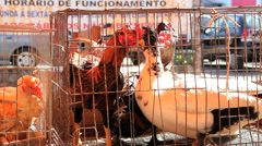People at street market, Brazil. Chicken. Stock Footage