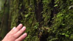 Bare Hand touches large, mossy tree trunk. Stock Footage