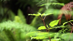 Gloved hand brushes over plant in rain forest. Stock Footage