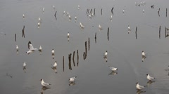 Seagull near mangrove forest in Thailand Stock Footage