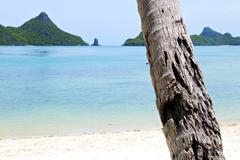 Asia kho phangan   tree  rocks in thailand  south Stock Photos