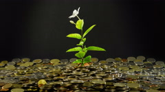 Blooming money tree close up rotation. Green sprout in a heap of the coins 4K - stock footage