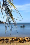 Phangan thailand    beach    rocks pirogue palm Stock Photos