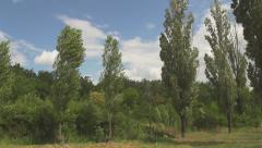 drive along the poplars slow motion - stock footage
