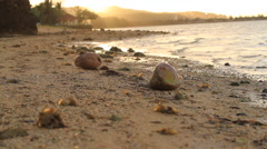 Strewn Coconuts on an Isolated Beach in GUAM Stock Footage