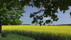 Yellow oilseed rape field under the blue sky with sun Stock Footage