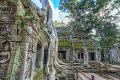 Ta Prohm Temple at Angkor Wat, Siem Reap Cambodia - stock photo