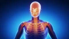 Human skeleton scan Stock Footage