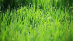 Background of green gras with dew Stock Footage
