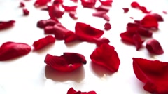 Red rose petals  on white background Stock Footage