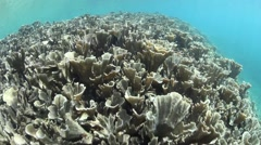 Fragile Corals Stock Footage