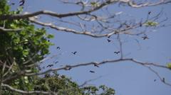 Flying foxes on sland of Boracay Stock Footage