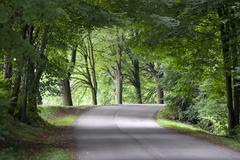 Road Avenue Trees Stock Photos