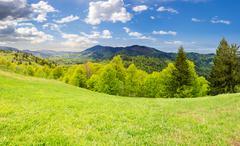 hillside meadow near forest in mountain - stock photo