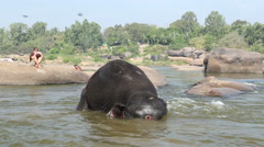 Beautiful playful elephant having bath in the river. Stock Footage