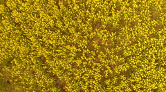 Flying over flowering field Stock Footage