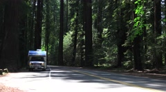 California Coastal Redwoods, motorhome parked - stock footage