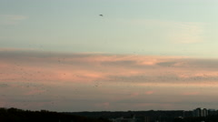 Migrating birds against a sunset Stock Footage