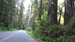 California Coastal Redwoods, moving car view Stock Footage