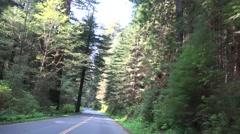California Coastal Redwoods, tall trees Stock Footage