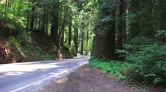 California Coastal Redwoods Stock Footage