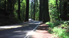 California Coastal Redwoods, Van driving in forest Stock Footage