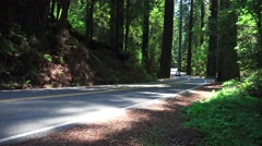 California Coastal Redwoods, black car driving Stock Footage