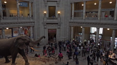Natural History Smithsonian Museum elephant entrance fast 4K 076 Stock Footage