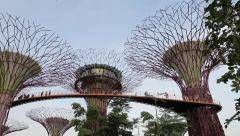 Supertrees and skyway in the park Gardens by the bay, Singapore - stock footage