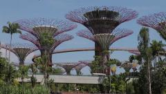 Supertrees in the park Gardens by the bay, Singapore - stock footage