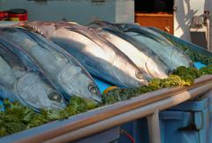 Fresh Tuna off the Boat Stock Photos