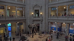 Smithsonian Natural History Museum entrance elephant fast 4K 080 Stock Footage
