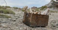 Box of Animal Bones in Badlands Abandoned Uranium Mine Locked Full Shot - stock footage