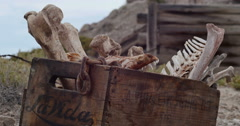 Box of Animal Bones in Badlands Abandoned Uranium Mine Locked Closeup Stock Footage