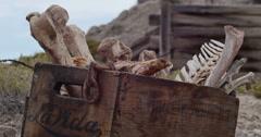 Box of Animal Bones in Badlands Abandoned Uranium Mine Locked Closeup - stock footage