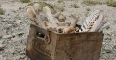 Box of Animal Bones in Badlands Abandoned Uranium Mine Pan Variation - stock footage