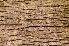 Stock Photo of Background Pattern, Brown Color of Horizontal Tree Bark Texture with Copy Spa