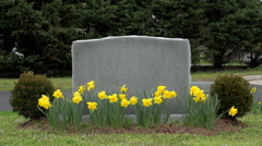 Gravestone In A Cemetery Stock Footage