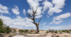 Dead Tree in Badlands Wilderness Landscape Primal Savage Time Lapse Clouds - stock footage