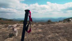 Nordic walking pole and huskies against the mountain lanscape Stock Footage