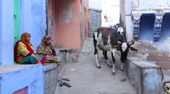 Two old women sitting in front of house and cow walking by in street Stock Footage
