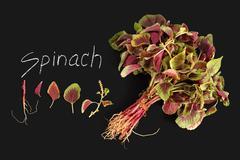 spinach amaranth  red fresh vegetable organic blackboard - stock photo