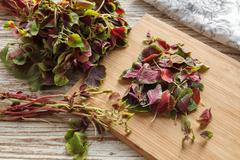Spinach amaranth  red fresh vegetable organic cooking salad Stock Photos