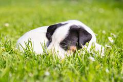 Mixed-breed cute little puppy on grass. - stock photo